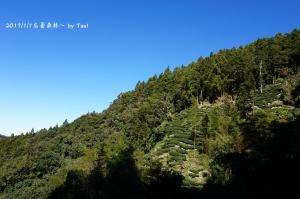 忘憂森林20170101