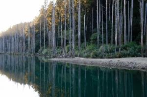 水漾森林:要有本事才有餘力欣賞