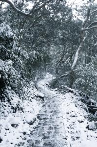 雪中走訪向天池