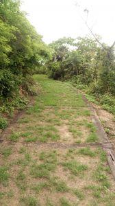大武森林步道