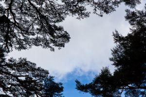 冬 / 鹿林、麟趾、特富野