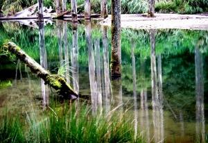◎ 水漾森林-美麗靜地 篇