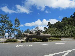 太平山台灣山毛櫸步道