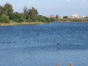 椬梧濕地~滯洪池