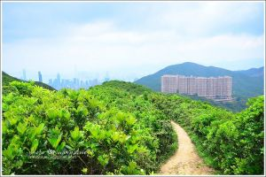 香港衛奕信徑-赤柱至陽明山莊