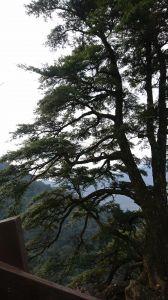 北得拉曼巨木步道