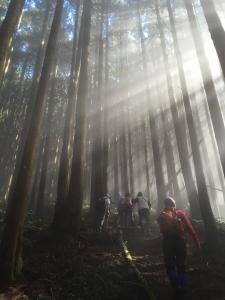 雲霧縹緲神來也