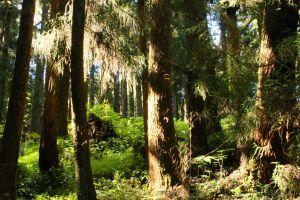 水山線巨木步道
