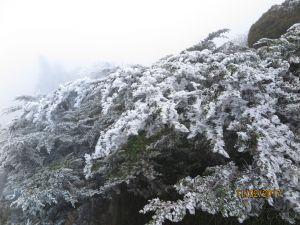 太平山霧淞