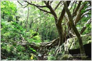 【屏東】恒春半島最高峰--里龍山