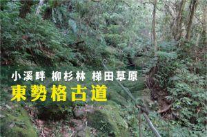 【新北市】東勢格古道(瓜寮坑溪)