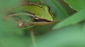 【動物】731號埤塘的綠精靈
