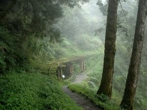 【路線】太平山國家森林遊樂區推薦步道