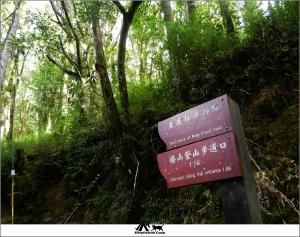 新竹五峰觀霧榛山步道
