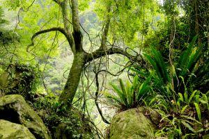 五峰鄉:梅后蔓瀑布群