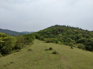 頂山風吹草低見水牛