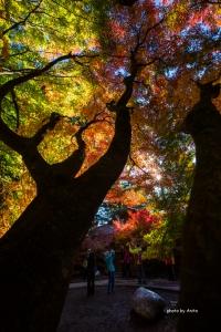 福壽山農場楓紅