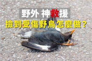 【環境】野生動物SOS 撿到受傷野鳥怎麼做?
