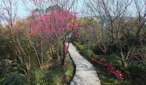紅淡山步道