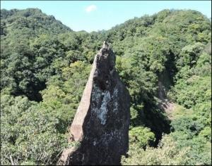 【新北市】岩壁上的精靈-艷紅鹿子百合(石燭尖花影)