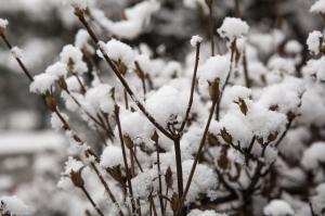 【戶外百科】一次搞懂!霰、雪、霜、霧淞、冰雹這樣分