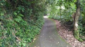 太平-咬人狗坑步道-主步道