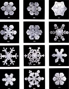 【戶外百科】雪地環境、台灣雪地健行注意事項