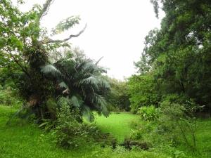 20161029 台北植物園生態記錄