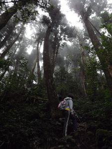 20160726忘憂森林