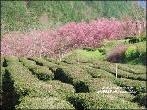 武陵農場捉住紅粉佳人的浪漫尾巴