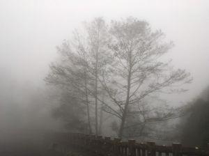 霧濛東眼山