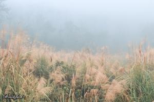 三義霧の森