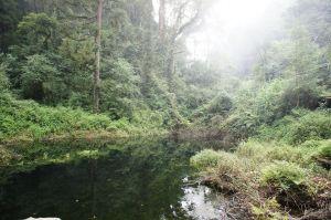 忘憂森林之旅