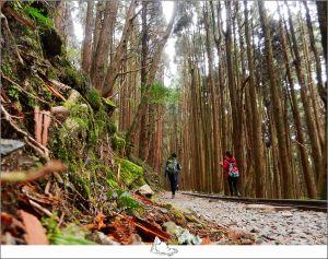 林間散步,特富野古道
