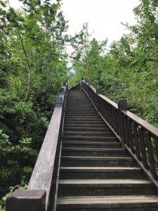2018.04銀杏森林步道
