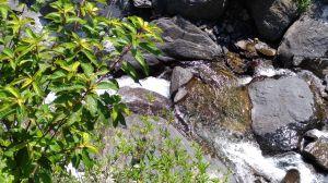 登山戲水於大羅蘭溪古圳步道(福山馬岸)
