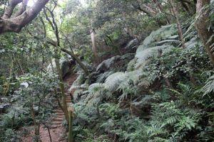 2017-4-19林口森林步道