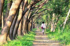 【台南】虎山無虎.西瓜山沒西瓜--虎山林場(西瓜山森林步道)尋幽記