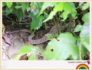 【動物】台灣六大毒蛇