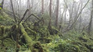 司馬庫斯古道縱走-魔幻森林之旅