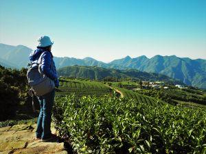 2018嘉義阿里山旅遊景點推薦|嘉義阿里山步道×體驗×美食