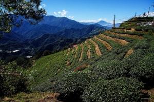 【南投】高峰山、巴蘭山、青青草原