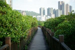 紅樹林生態步道