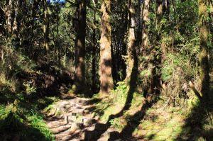 【山旅照片】原始林漫步