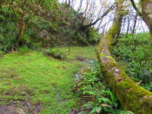 【宜蘭礁溪】烘爐地山步道 探桶後溪源頭