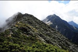 [山岳之美]南湖杜鵑現形記