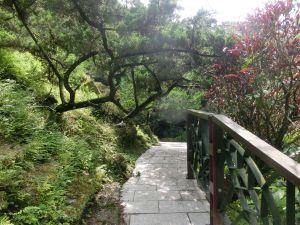 大成殿步道.茶香環狀步道