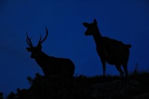 【美哉台灣】鹿群守護的白石之夜