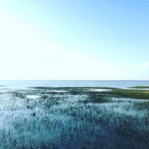 2017高美濕地