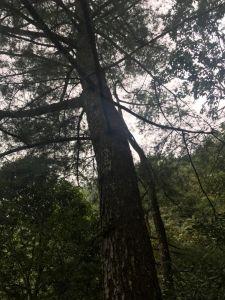 谷關大道院上的東卯山